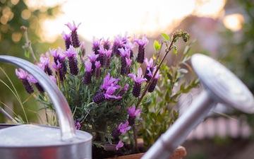 Bild Zum Artikel: Mediterraner Garten | Mediterrane Pflanzen |  Gartengestaltung