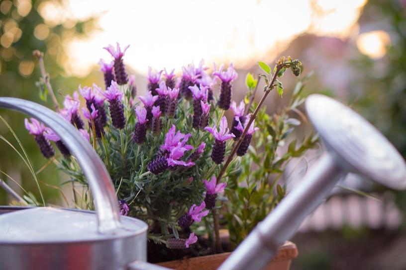 Mediterrane Pflanzen Fur Den Balkon Garten Tipps Tricks