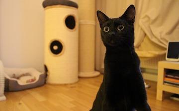 Mit Katzen Spielen Selbstgemachtes Katzenspielzeug Für Wohnungskatzen