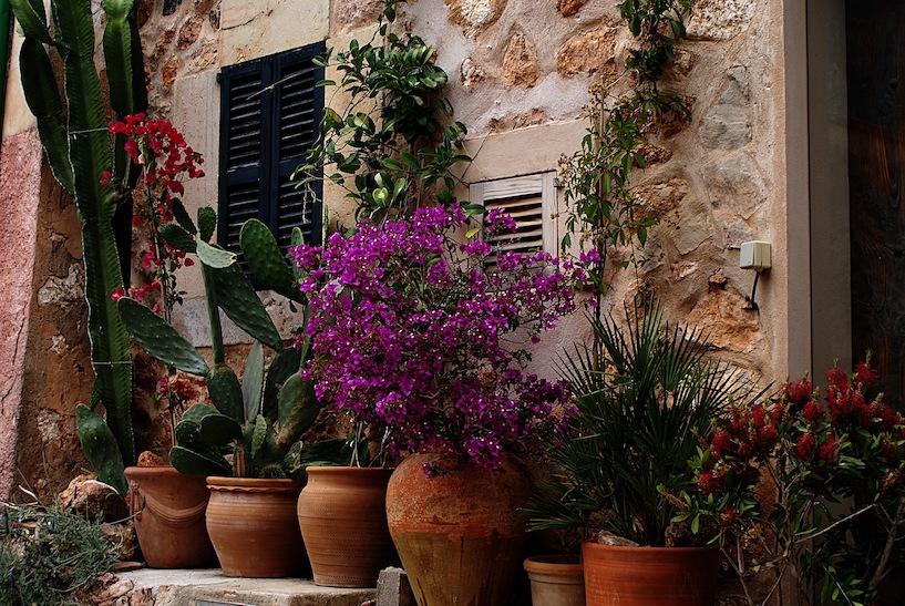 mediterrane pflanzen f r garten balkon tipps 2015. Black Bedroom Furniture Sets. Home Design Ideas