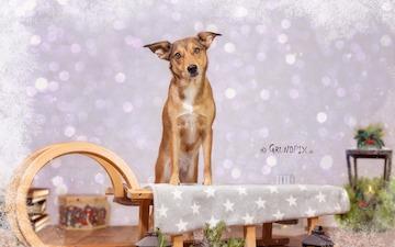 Originelle Weihnachtsgeschenke Für Hunde Katzen Was Geht Was Nicht