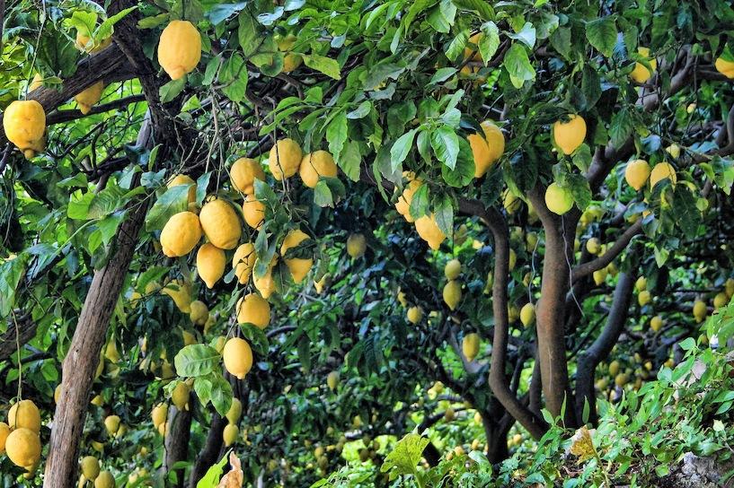 Mediterrane Pflanzen Für Den Balkon Garten Tipps Tricks