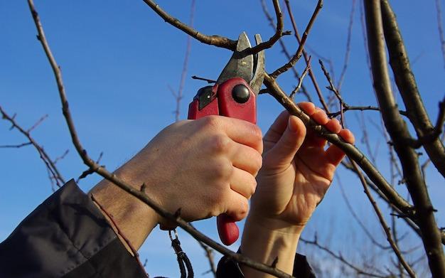 Bäume schneiden  Baumschnitt- Bäume & Obstbäume richtig schneiden: Anleitung f ...